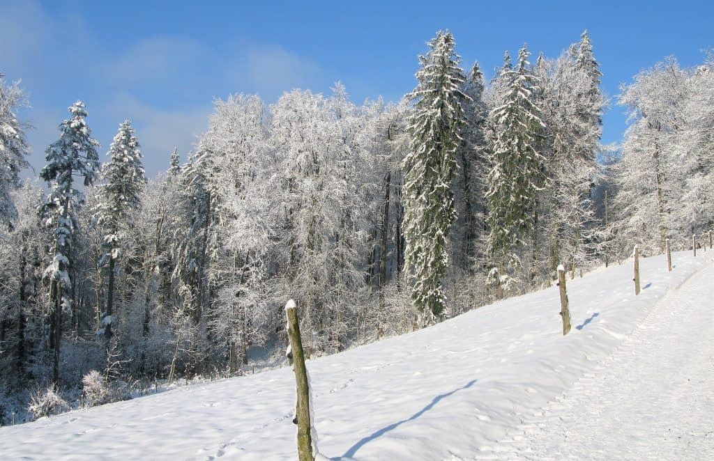 Hike and sled down the Uetliberg Mountain