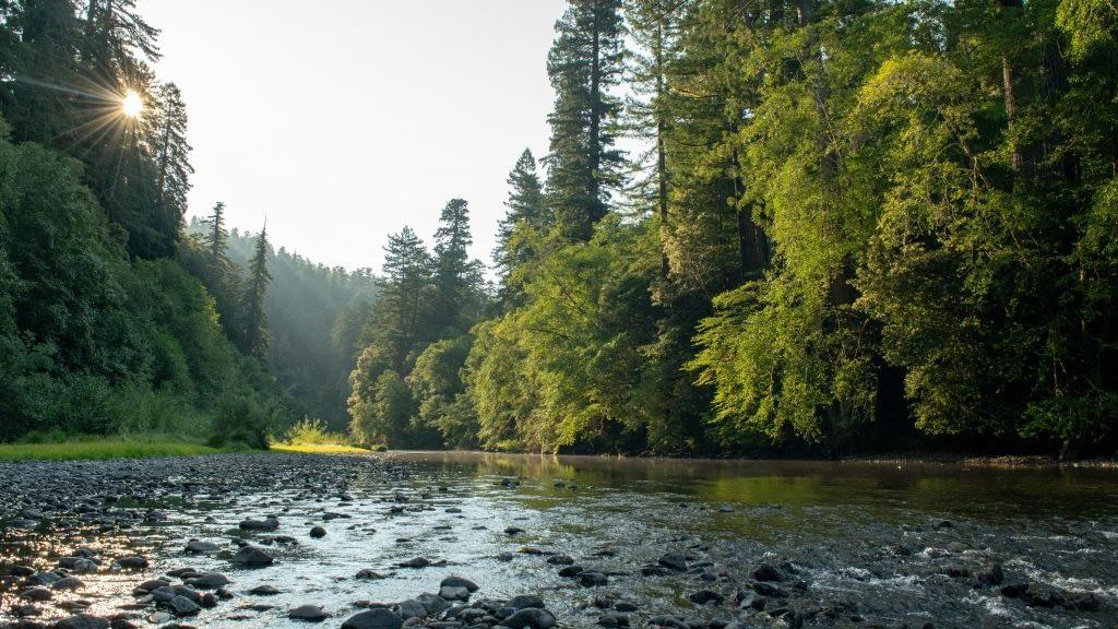 Detour Redwood National Park
