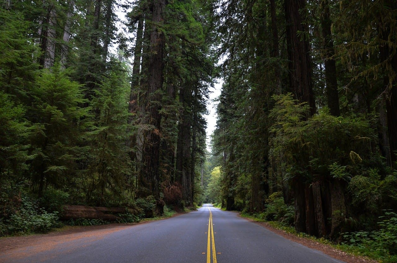 redwood roadway