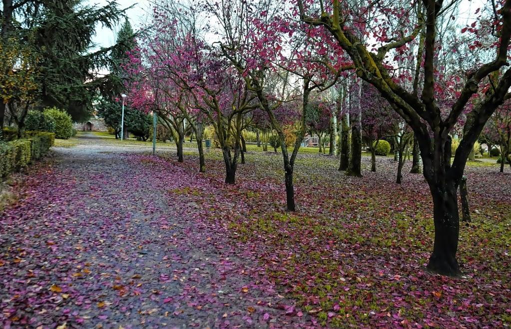Jesuitas Park