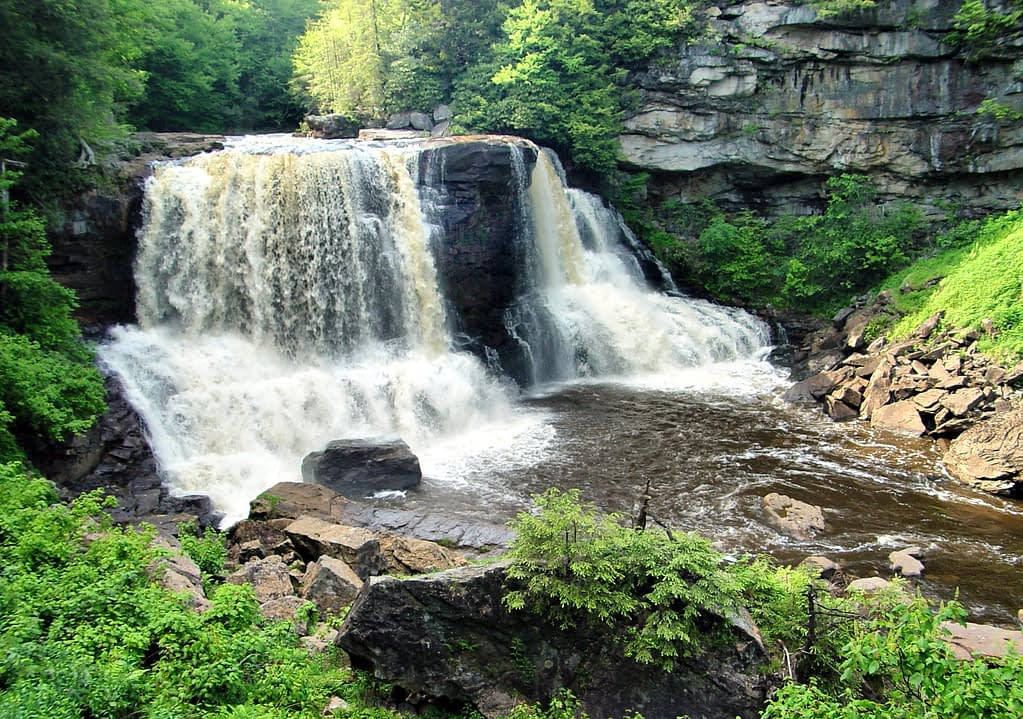 Blackwater Falls Trail